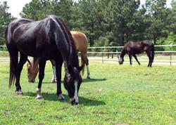 Eastern NC Equine Veterinarian