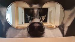 Interior Desgin_Hund mit Brille aus Spie