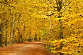 Door het bos wandelen is bewezen goed voor je mentale gesteldheid.