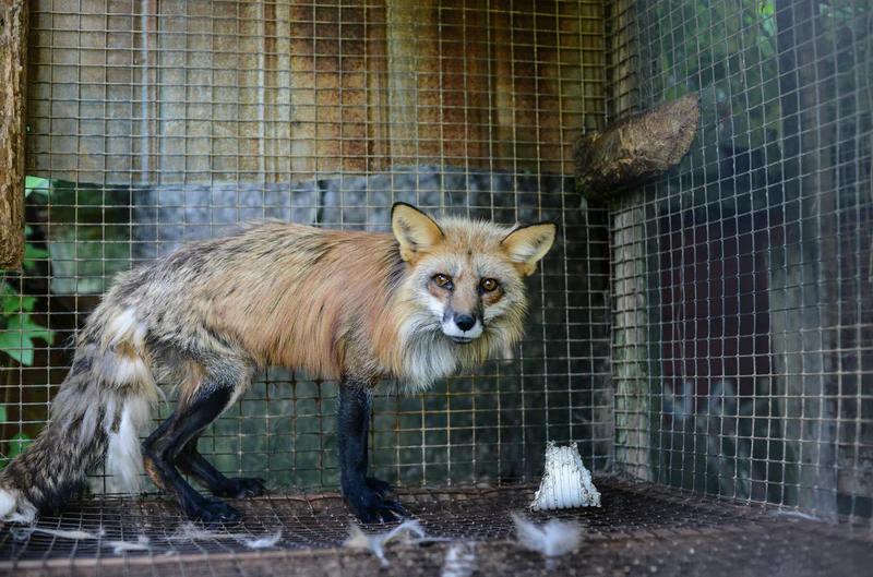 Penchant for Cruelty