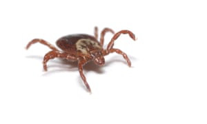 Tick-Borne Virus - Another Virus Saying Hello