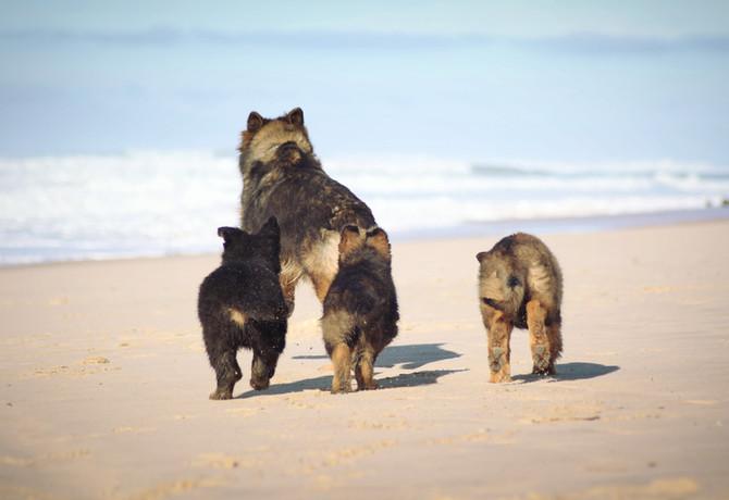 Les Puppies à l'océan !