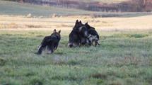 Nationale D'élevage UCFAS - Oberhaslach