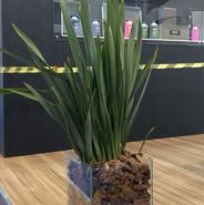 Formio - Vaso de Vidro