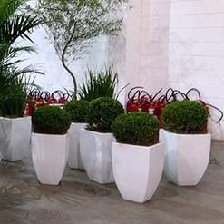 Buxinho - Vaso Trapezio Branco