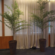 Bambu mosso - Vaso Conico Marrom