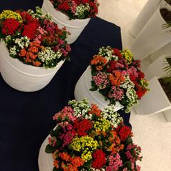 Flores Kalanchoe - Vaso Cimento Branco