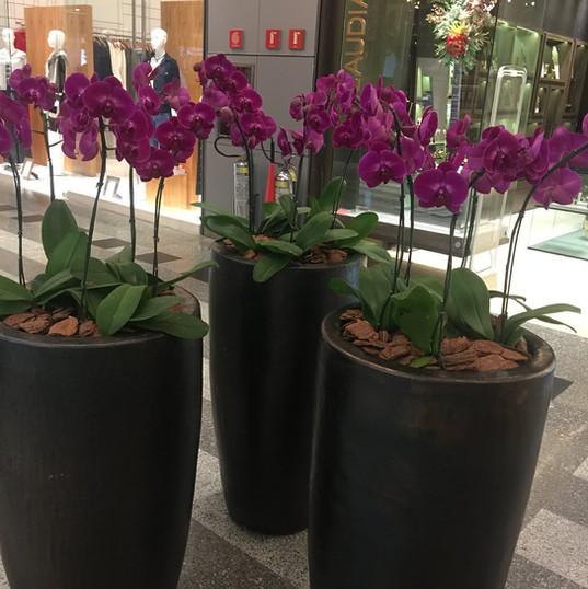 Orquideas Natural - Vaso Conico Preto