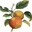 Le Bois Logo