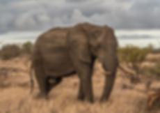 luxuy safari, south africa, cape town, tanzania