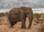 Éléphant dans la nature
