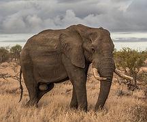 слон-lubkailievakk.com