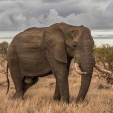 Tembe Elephant Park Webcam
