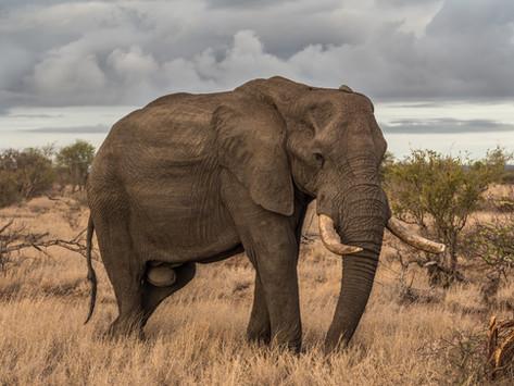 הממשלה כמשל - העיוור וארבעת הפילים