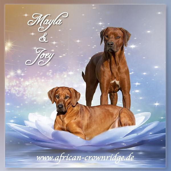 Joey&Mayla-1.jpg