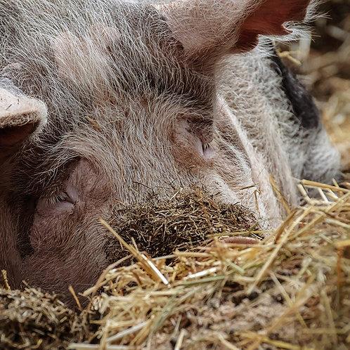 Mischpaket Schwein