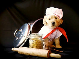 Golden Retriever puppy as a Chef