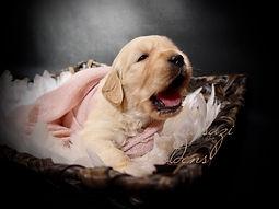 Tizzy Puppy 5.JPG