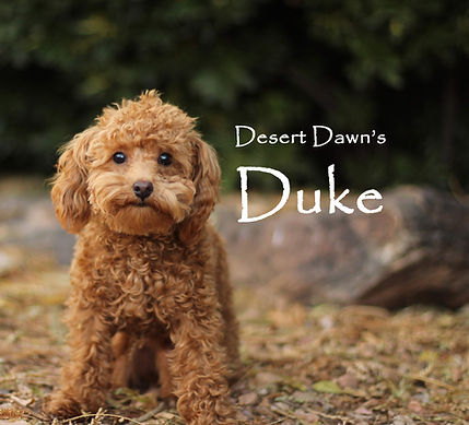 Duke for ad with name.jpg