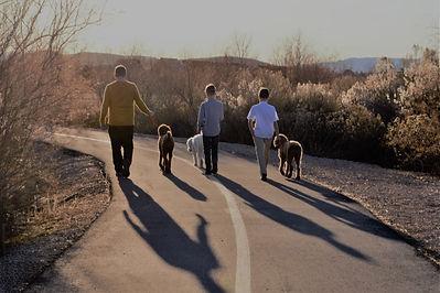 Three boys three dogs.jpg