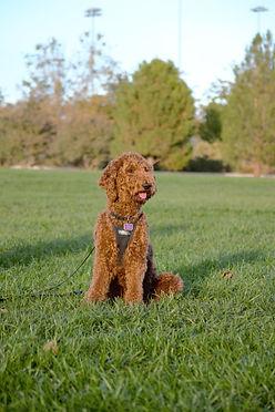 lizzie dog (2).jpg