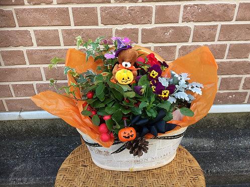 花鉢アレンジ