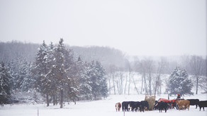 The Farm Diaries -  Snowy Days and A 2019 Mantra