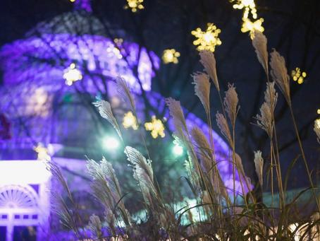 Holiday Season Glow at The New York Botanical Garden