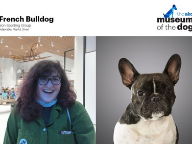 A Day at Museum of the Dog