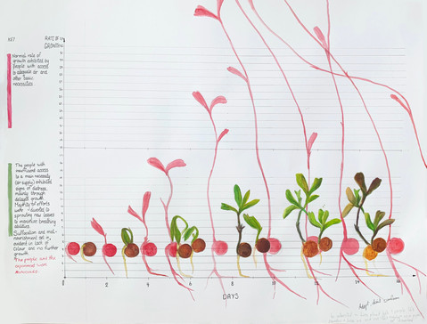 Rate of Growth in Varying Conditions Chart:  RED: Normal rate of growth exhibited by people with access to adequate air and other basic necessities.  GREEN: The people with insufficient access to a main necessity (air supply) exhibited signs of distress mainly through delayed growth. Majority of efforts were diverted to sprouting new leaves to maximize breathing abilities. Suffocation and malnutrition set in, evident in lack of colour and no further growth.  The people and experiment were abandoned.