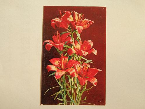 """Открытка цветы """"лилии"""", 1976 г., СССР"""