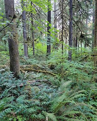 ForestOpen.jpg