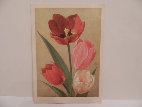 "Открытое письмо ""тюльпаны"", 1968 г., Таллин"