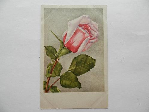 """Открытка """"роза"""". Германия"""