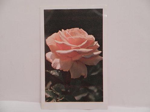 """Открытка """"роза"""", 1975 г., СССР"""