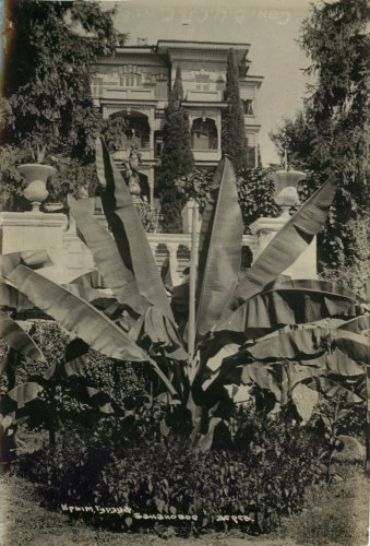 Фотооткрытка «Крым. Гурзуф. Банановое дерево» («Санаторий ВЦСПС №8») СССР