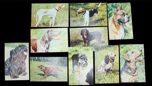 Набор открытых писем «Охотничьи и декоративные собаки», изд. «Планета», 10 шт СССР