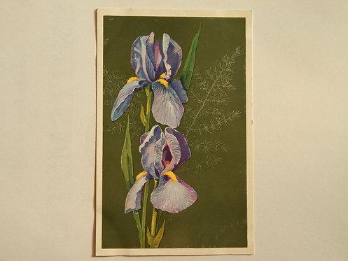 """Открытка цветы """"ирисы"""", 1972 г., СССР"""
