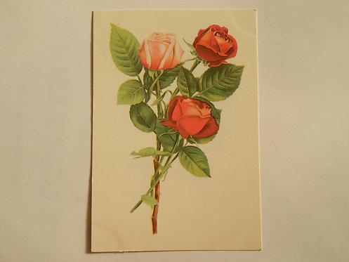 """Открытое письмо """" розы"""", 1968 г., Таллин"""