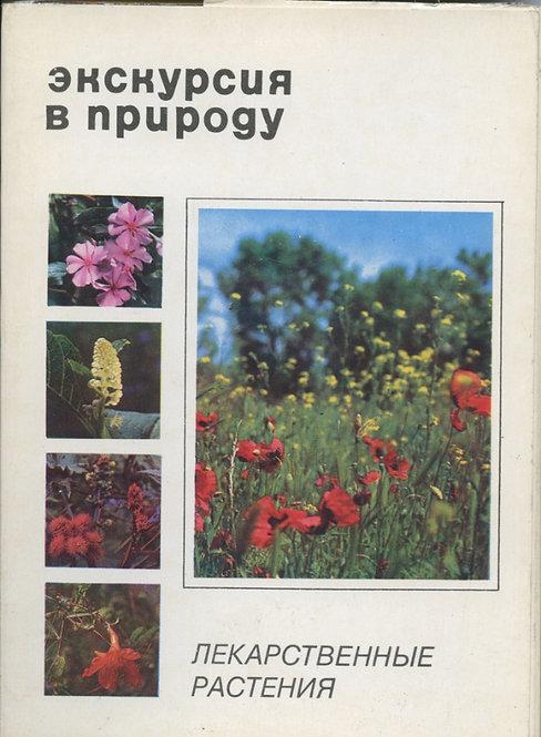 """Набор открыток «Экскурсия в природу - Растения"""""""