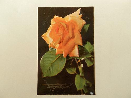 """Открытка цветы """"роза"""", 1977 г., СССР"""