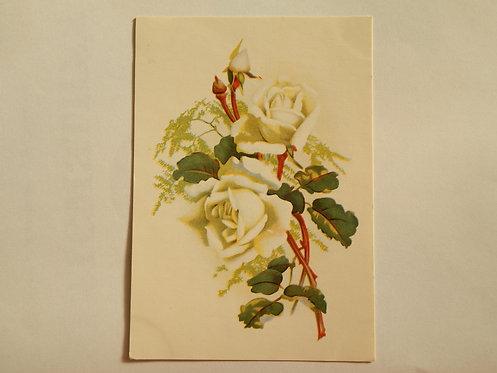 """Открытое письмо """"Белые розы"""", 1968 г., Таллин"""