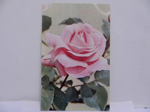 """Открытка роза """"Куин Элизабет"""", 1973 г., СССР"""