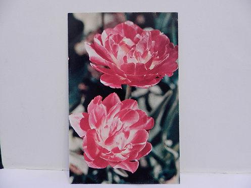 """Открытка цветы """"тюльпаны"""", 1976 г., СССР"""