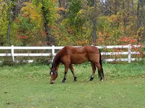 Fall Pony