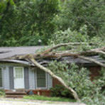 Home with Tree Damage.jpg