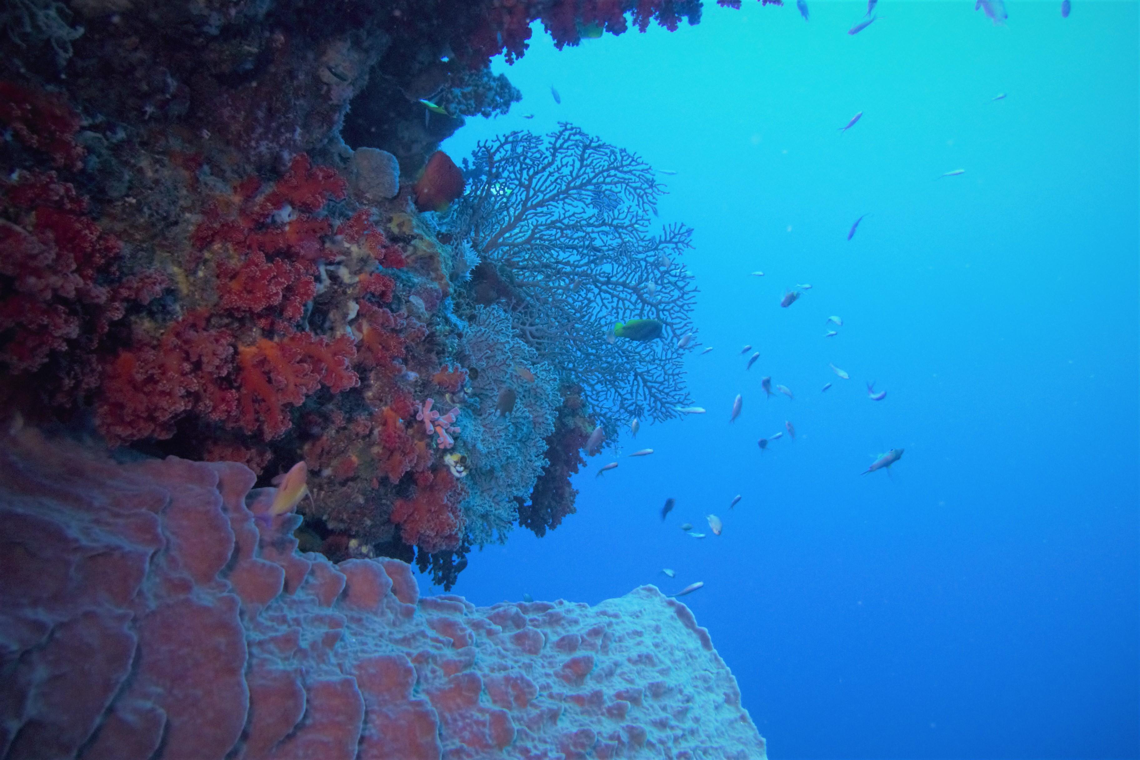 overhang_sponge