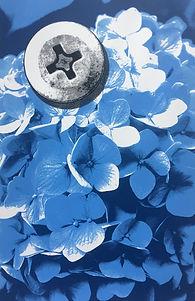 Blue Hydrangea (2018).jpg