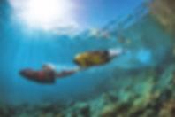 SEABOB F5S Snorkel