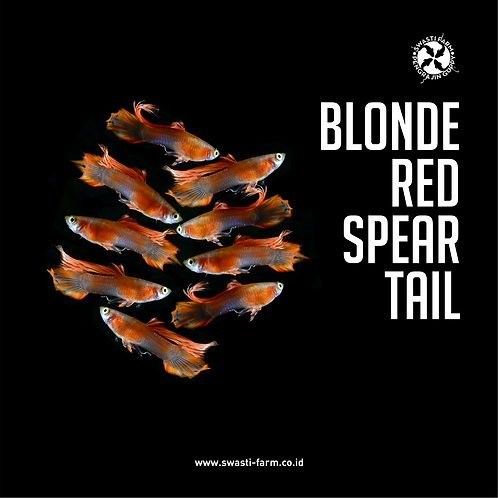 BLONDE RED SPEAR TAIL